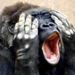 猿が同一労働報酬格差を理解?ぶどうときゅうりの実験がヘンテコ過ぎる件