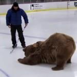 ケーシー・アンダーソン先生と熊!グリズリーのブルータス