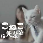こねこ先輩JAバンクCMの営業動画!マジシャン先輩猫子猫もタジタジ