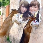 鈴木奈々×益若つばさ!顔劣化崩壊もかすむブログ記事炎上級騒動!