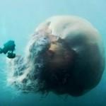 超巨大生物画像 犬・猫・昆虫・海洋生物 UMA