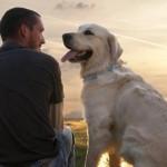【感動実話】犬が教えてくれた思いやりの心