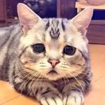 困った顔の猫ちゃんの画像集まとめ