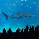 水族館を100倍楽しむための豆知識