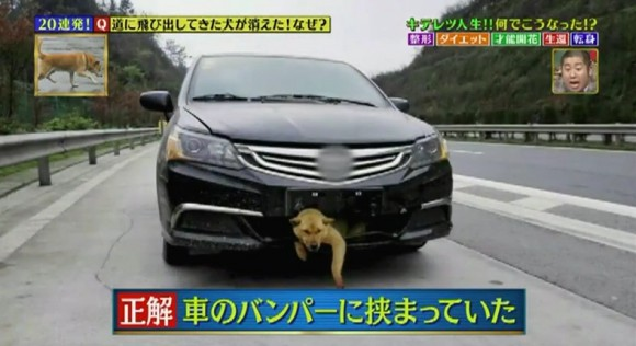 11 道に飛び出してきた犬が消えた!なぜ?-2