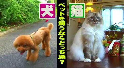 どっち派 (4)