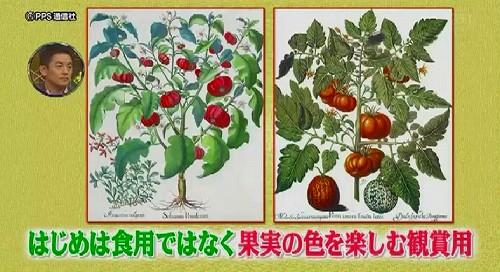 tomatoyoguruto (47)