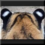 人に優しい雑学クイズ ~ トラの耳・タクシーフェンダーミラー・ボールペンキャップの穴の秘密他