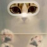 猫グッズは100均グッズで手作りオッケー牧場!猫ホイホイ!……っと。