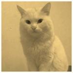 【感動】生き別れ猫難民クンクシュ 奇跡の再会