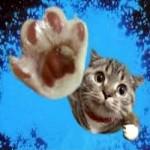 【癒される】 かわいい猫と犬・動物おもしろハプニング動画