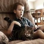 【感動動画】 飼い猫タラちゃんが犬に体当たり、子どもの命を救う! 【全米が泣いた】