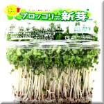がん予防にブロッコリースプラウト!!星野泰三先生が教える食べ物 ライフスタイル