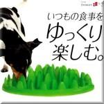 今日使える雑学~ナンダコレ!?ドッグフード凸凹食器のワンダフルな秘密