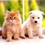 【どっちがお得?】ペットを飼うなら「わんこ?」or「にゃんこ?」