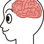 男性脳と女性脳の違い 脳は簡単にダマされる