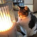 ストーブ猫の「ぶさお」と飼い主の感動話