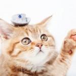 猫が「愛される理由」を科学的に分析した結果は!?